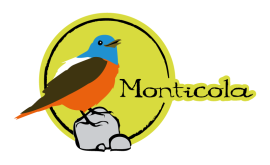 seo_logo-monticola